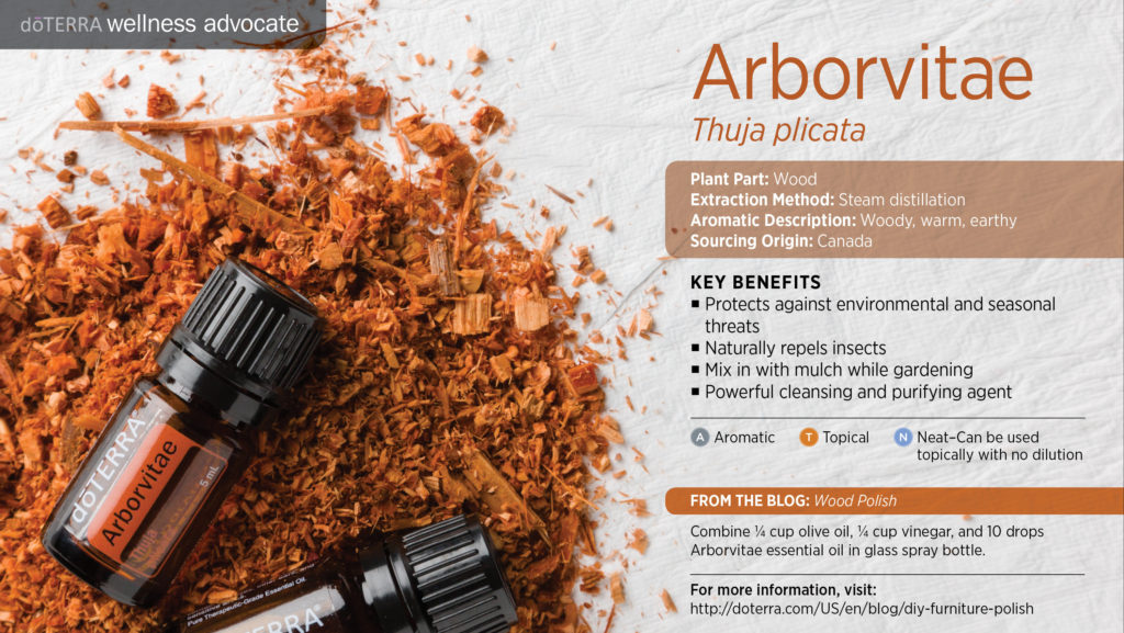 doterra-wellness-advocate-arborvitae-essentialoil